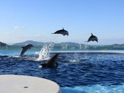 海豚プール1